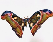 Butterfly 3. Watercolour Painting Original Art