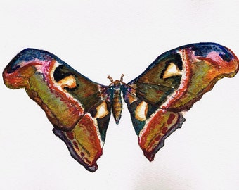Butterfly 3. Watercolour Painting Original Art