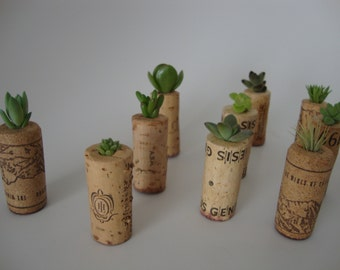 Collection of 25 Succulent and/or Air Plants in Wine Cork Planters - Wedding Favors, Event Favors, Guest Favors, Gardens