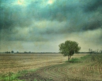 Nature photography, lonely tree photo, country landscape, countryside, surreal, nature photograph home decor blue, Ontario, dramatic skies
