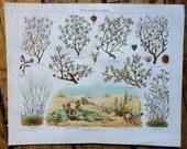 1894 desert plants original antique botanical print