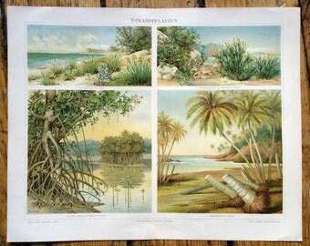 1894 COASTLINE FLOWERS LITHOGRAPH - flowers & plants original antique botanical print - tropical