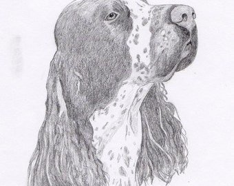 Springer Spaniel Signed Personalized Original Pencil Drawing Double Matted Print -Free Shipping- Desert Impressions