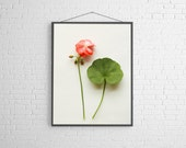 Spring Modern Flowers Botanical  Archival Photograph