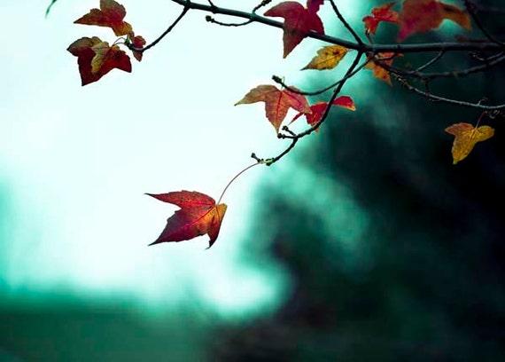 Teal Orange Wall Art, Rustic Fall Photos, Nature Photography, Rustic Decor, Fall Leaves Print Autumn Leaf Photo, Orange Teal Wall Art Prints