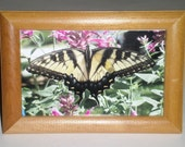 Swallowtail Butterfly Photo - Framed Photo - 5 x 7 Butterfly Photo - Yellow and Black Butterfly - Summer Photo - Butterfly and Flowers