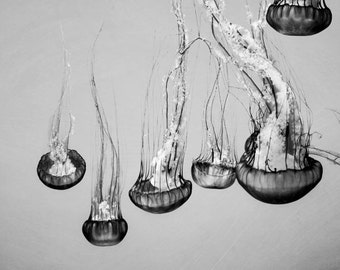 Jellyfish Photograph, Black And White, Nautical, Ocean, Sea Creatures, Monochromatic, Jellyfish Wall Art
