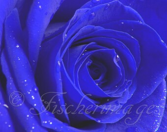 Rose Macro Flower Roses Red White Blue Trio Set Nature Digital Downloads Photo Prints Fine Art Photography