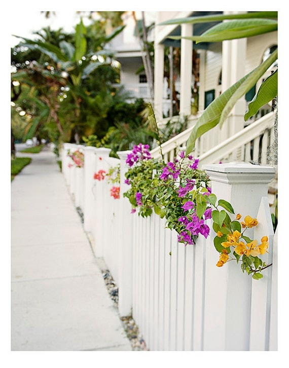 Art, Photography, Key West Photography, Wall Art, Print, Travel Photo, Blossoms, Pastels