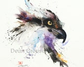 FISH HAWK Osprey Watercolor Print by Dean Crouser