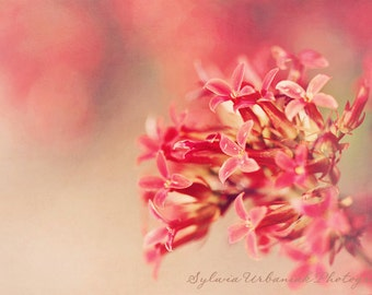 Macro Photography Flower Photography  Nature Photography digital Spring Decor Flower  Red Wall Art Fine Art Photography Print