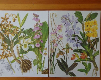 HUGE Vintage Trio of Luscious  Botanical Flower Prints, Show from a distance, Tropical, Asian, Middle Eastern, Spring Hues, Yellow Lavender