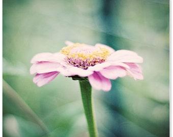 Flower photography, pink flower wall decor, nursery art decor, shabby chic decor, girls room decor, pastel pink, soft green