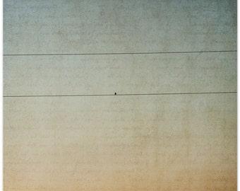 Photograph, bird on wire, Virginia sunset, Oiseau de Solitaire