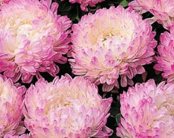 Pink Duchess Peony