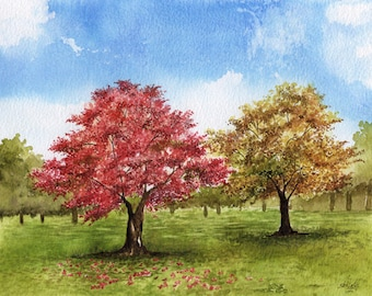 Maple Tree Grove Watercolor Painting
