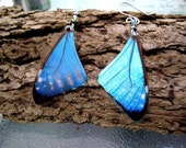 Blue Butterfly Earrings, Blue Morpho, Blue Butterfly