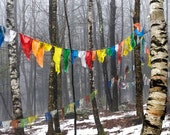 prayer flags squared, fine art color photograph, nature, woods, birch