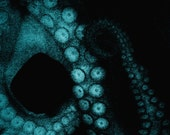 Octopus Photograph Black Teal Wall Art Sea Creature Tentacles Ocean Life Octopus in Teal 8x8
