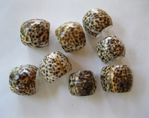 Tiger Cowrie Shell Napkin Rings Group of 8 Seashells