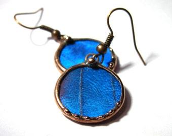 Butterfly Jewelry - Copper  Blue Morpho Earrings- Real Butterfly