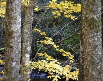 A Touch of Gold - Photograph - fall mountain lake photo