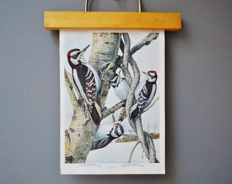 Antique Bird Book Plate - Woodpeckers - 1940s