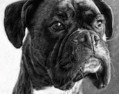 The Portrait B&W - Boxer Dog LARGE A4 A3 or A2 Limited Edition Art Print of original drawing by Steve Russell of RussellArt