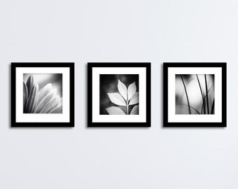 Black and White Photography Set - 12x12, 10x10, 8x8, 5x5 Nature Prints modern gallery wall photographs dark grey gray artwork neutral photo
