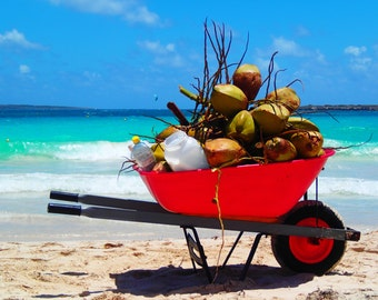 Refreshing Coconut Water at Orient Beach Photograph 8x10