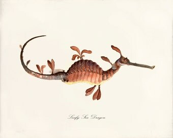 Antique Sea Horse Art Print - 8x10 - Sea Dragon