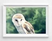 """Barn Owl Photograph Unframed / Evergreen dreamy fairy tale forest woodland winter decor / green mint taupe brown tan / """"Sweet Disposition"""""""