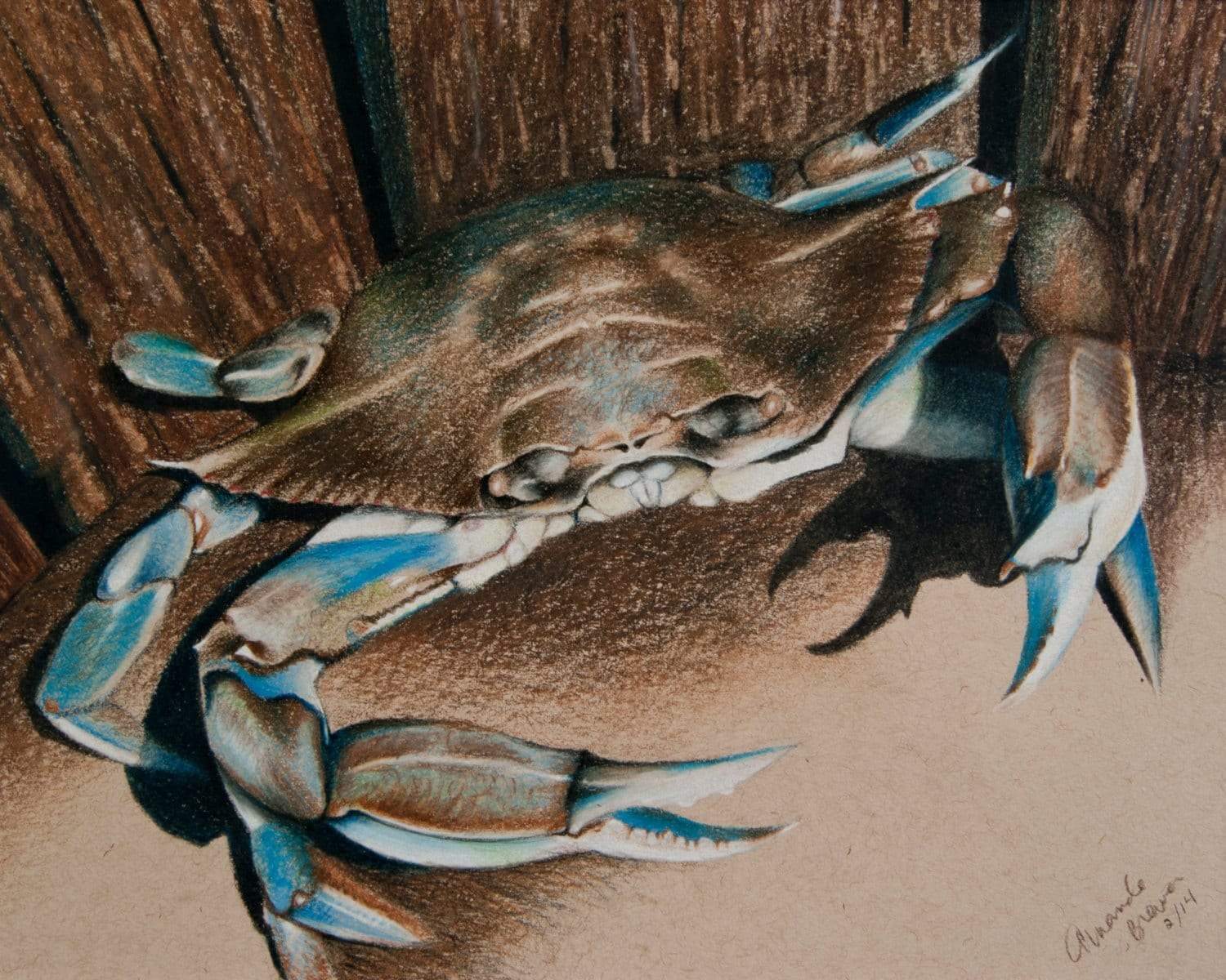 It's just an image of Agile Blue Crab Drawing