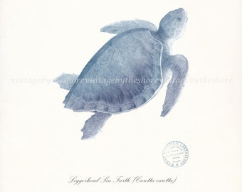 Coastal Decor Art Print - Loggerhead Sea Turtle No. 1, Endangered Species Natural History Wall Decor - blue  size options