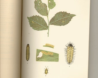 Elm-Leaf Beetle in New York State - New York State Museum Bulletin Vol. 5, No. 20, 1898