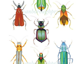 Entomology Drawings of Beetles Bugs and Insects from my Original Watercolor. Prints and Posters Home Decor. Interior Design Trends.
