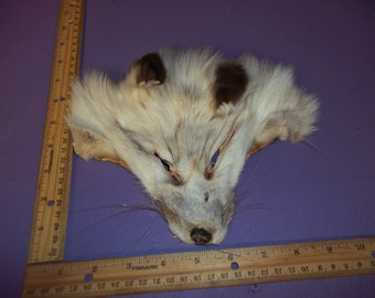 real animal fur Tanned blue marble ranch fox face head taxidermy skin pelt hide parts