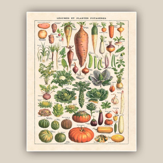 Art cuisine impression de l gumes plantes m dicinales art for Art et cuisine rm 101