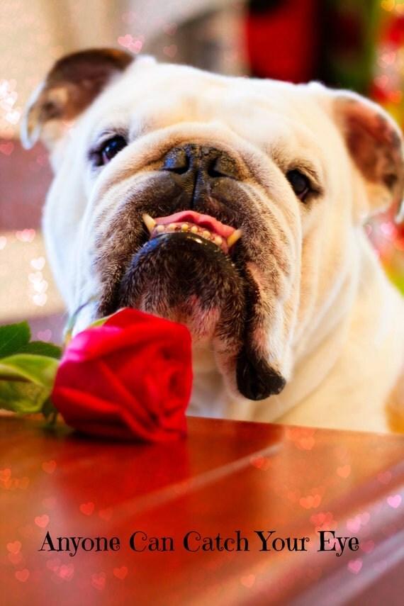 5 x 7 adorable english bulldog valentines day card