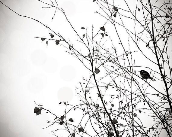schwarz wei druckt vogel fotografie dekor vogel in einem. Black Bedroom Furniture Sets. Home Design Ideas