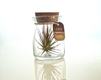 One 100% Love Cute Little Air Plant Habitat, Air Plant Glass Bottle Terrarium, Glass Bottle Air Plant Terrarium, Air Plant in a Bottle