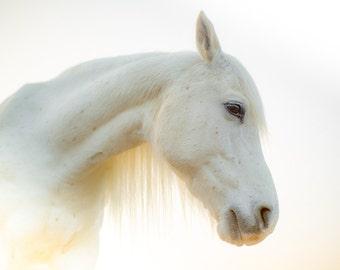 White horse fantasy photography. Whimsical surreal horse photo for little girl bedroom, children wall art, nursery horse decor, horse lover