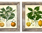 Set of 2 Fruit Prints - Multiple Sizes Available