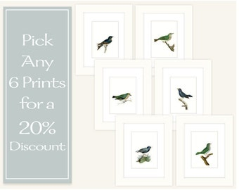 Any 6 Prints for a 20% Discount