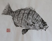 BARRED SURF PERCH Original Gyotaku - traditional Japanese fish art by dowaito (2)