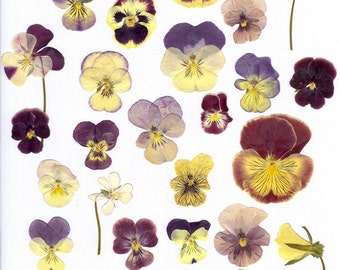 Wedding Table Real Dried Pressed flowers for crafting,  Pansy Pressed Flower Mix