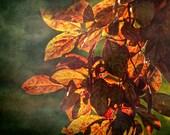Season of Change - Autumn Landscape - Nature Photography - Tree - Leaves - Colorful - Fall - Autumn Photo - Living Room Art - Home Decor