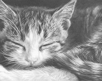 Set of 5 Greetings Cards, Tabby Cat pencil drawing, Cat Print, Cat Art, Cat Picture, Gift for cat lover.