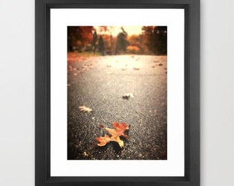 "Title:""Leaves of Autumn""-Fine art photography-Falls Church, VA"