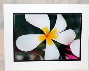 photo card, white plumeria, photography card